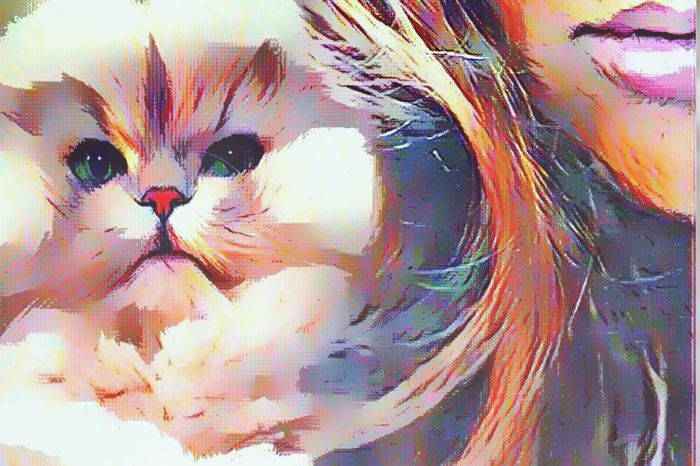 Multi Colored Close-up Abstract Full Frame Creativity Artphoto Artistic Expression Eye4photography  Colour Of Life No People Backgrounds Indoors  Day Colourful Always Be Cozy Moments I Love My Cat ❤ Persian Cat  Popular Photos Images Family❤ Thank You My Friends 😊