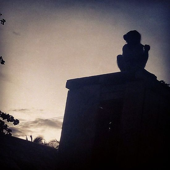 Sunset Ape SelamatHariRayaAidiladha