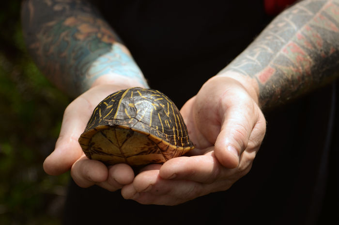 A man holds a box turtle found in the Florida Everglades. Animal Themes Box Turtle Close-up Day Human Hand Nature One Animal One Person Outdoors Real People Reptile Shell Tattoos Tortoise Shell Turtle The Great Outdoors - 2017 EyeEm Awards This Is Masculinity