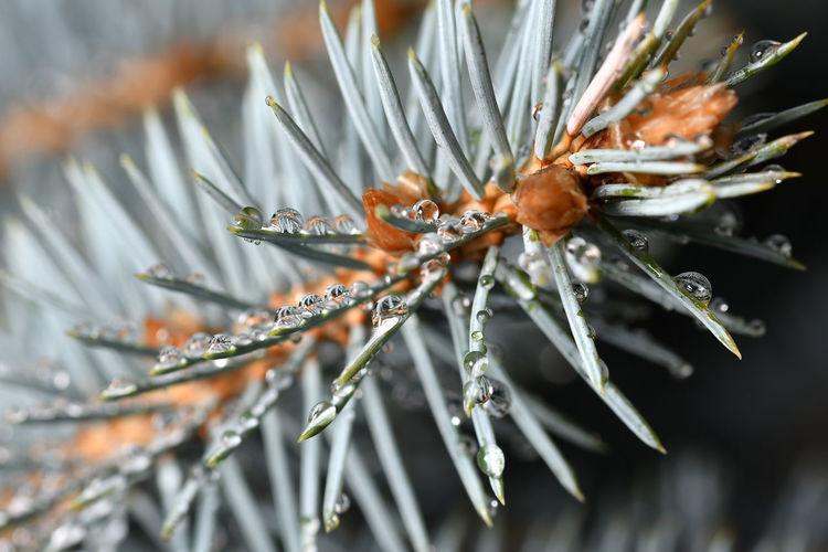 Close-up of frozen flower