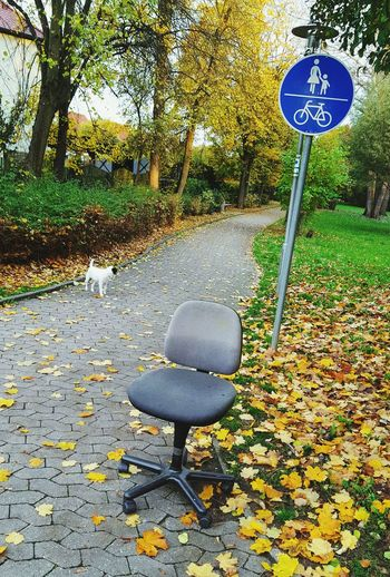 uhm, take a seat. ☺ Streetphotography Swivel Chair Wrong Place Strange Things Dog A Dog's Life Take A Seat
