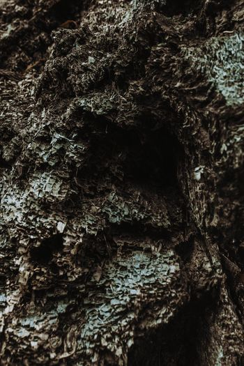 Tree Textured