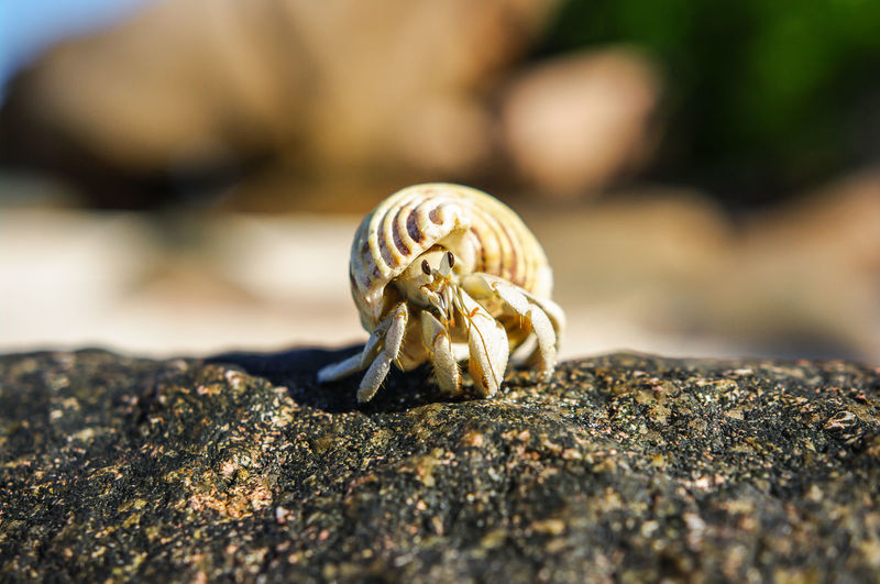 hermit crab Animal Wildlife Animal One Animal Animals In The Wild Close-up Hermit Crab Crustacean Crab Shell Day Nature No People Land Animal Shell Outdoors Selective Focus Marine Seychelles Inquisitive Animals Beach Beachphotography Wildlife The Great Outdoors - 2019 EyeEm Awards