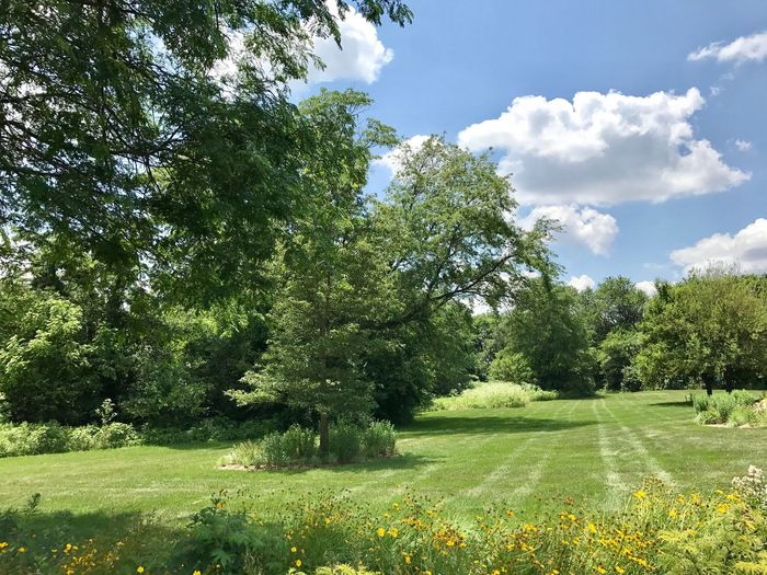 View from Tippecanoe County, Indiana Tree Growth Nature Grass Beauty In Nature Tranquility Field Green Color Sky Tranquil Scene Day Landscape Scenics Outdoors No People Plant Flower Blue Sky