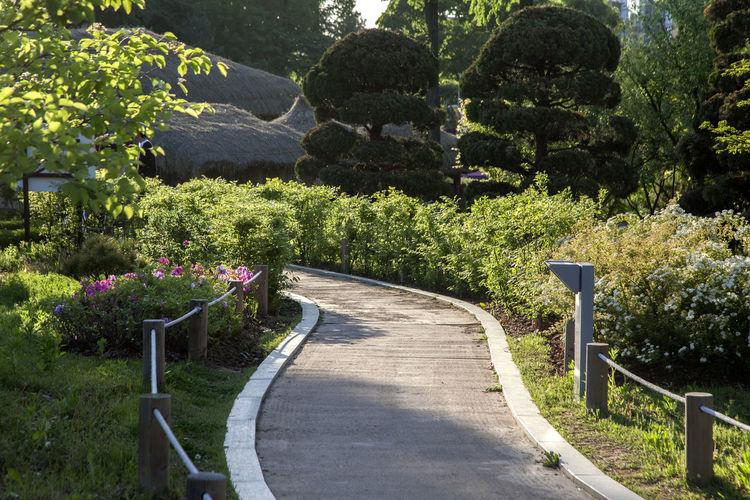 Footpath By Trees In Garden
