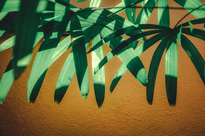 Plant against wall