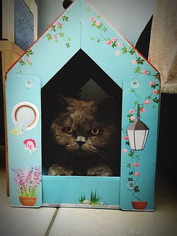 The place 2 B 4 cats Pets Domestic Cat Domestic Animals Cat Animal At Home No People Cute