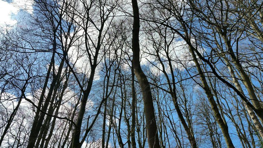 Yorkshire Skipton Trees And Sky Tree_collection  Blue Sky Blue Sky And Trees Branches And Sky Branches