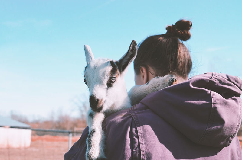 Girl holding baby goat on farm Baby Farm Farm Life Goat Baby Farm Animals Clear Sky Day Domestic Domestic Animals Focus On Foreground Girl Herbivorous Holding Livestock Mammal Nature One Animal Outdoors Pet Owner Pets Real People Sky Women
