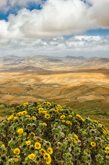 Arid Landscape Viewpoint View From Above El Mirador Fuerteventura Flowers The KIOMI Collection The Great Outdoors With Adobe