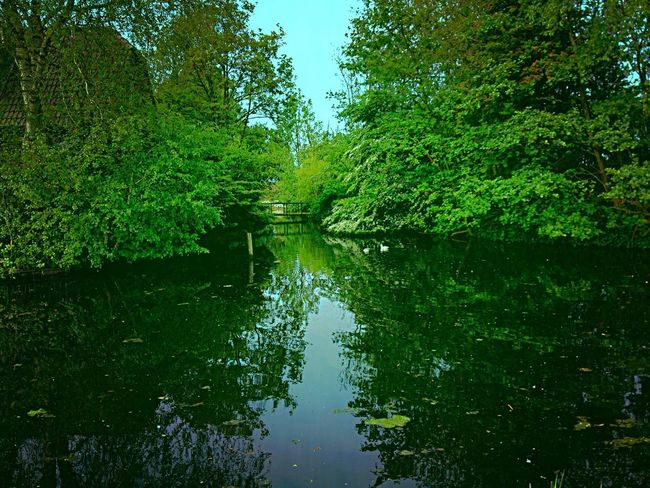 Reflection Tree Water Lake Nature Outdoors Beauty In Nature Tranquility Standing Water Tranquil Scene Scenics Waterfront Day Growth No People Sky