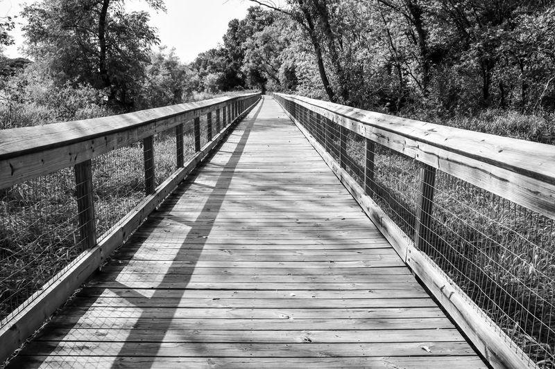 Empty footbridge along trees
