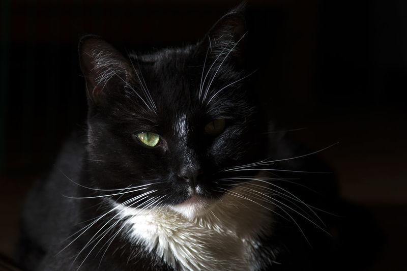 Cat Cat♡ Cat Lovers Catsofinstagram Catoftheday Cats Of EyeEm Majestic Majestic Creature Majestic Animal Domestic Animals Black Cat Pet Photography  Pet Light And Shadow Eye4photography  EyeEm Best Shots