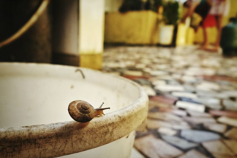 Close-up of snail on bucket at cobblestone street
