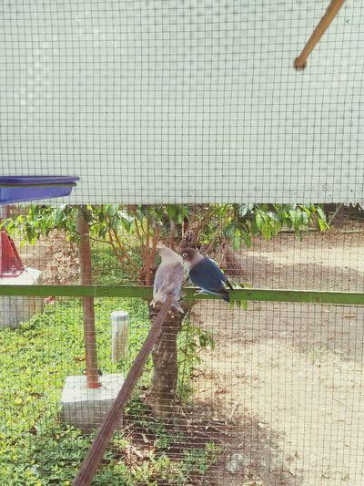bird Birds Hewan Building Exterior Childhood Greenhouse Full Length Girls Child Boys Plant EyeEmNewHere
