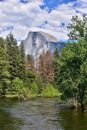 Tree Cloud - Sky Water Mountain Nature Sky Day Beauty In Nature Scenics Tranquility Lake Outdoors Tranquil Scene No People Travel Destinations Waterfront Forest Mountain Range Growth Landscape Yosemite National Park Half Dome Been There.