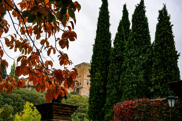 Low angle view of plants against trees during autumn