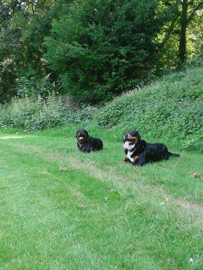 Ich Liebe Meinen Hund! Sommerfeeling Dogoftheday Freya Mit Rocky EyeEm Animal Lover Unterwegsunddraußen