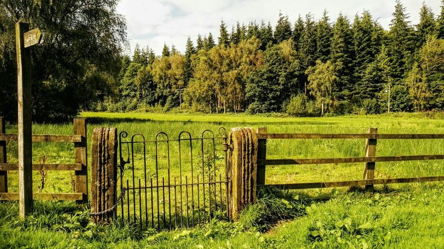 Gate And Fence At Dunsop Bridge Lancashire Safety Protection Outdoors Growth