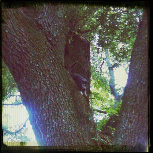 Hugging A Tree Cat♡ My Cats James Island