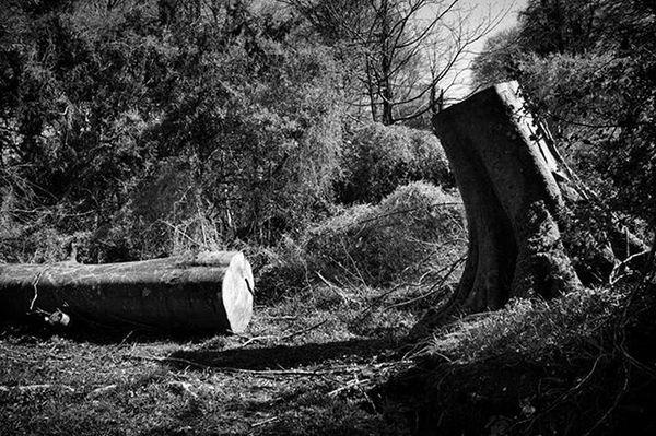 Mankinds crimes Kerry Killarney  Killarneynationalpark Forests Forest Tree Trees Cut Cutdowntrees Blackandwhite Bnw_life Bnw_demand Bnw Bnw_society Monochrome Destruction Igers Mgu5k Moodygrams Ig_bnw Ireland Insta_ireland