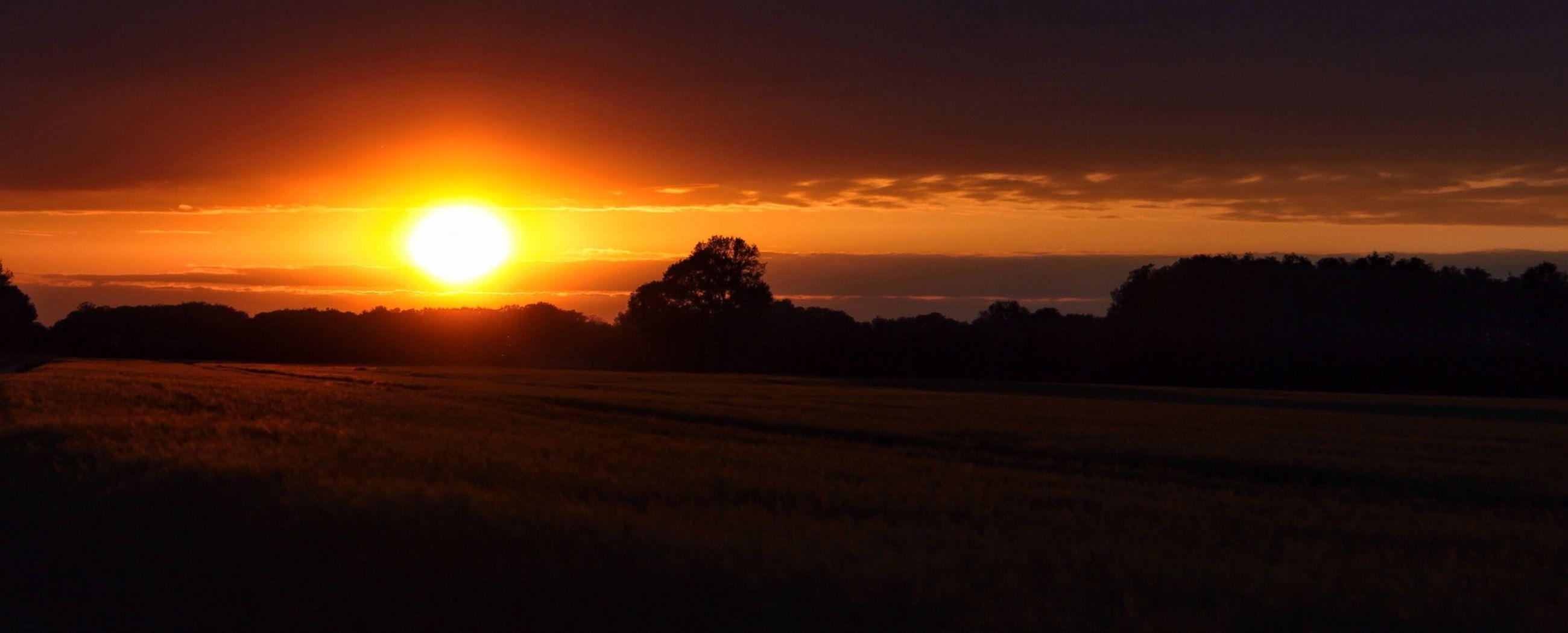 sunset, landscape, tranquil scene, tranquility, scenics, sky, sun, beauty in nature, field, silhouette, orange color, nature, idyllic, rural scene, cloud - sky, sunlight, horizon over land, cloud, tree, agriculture