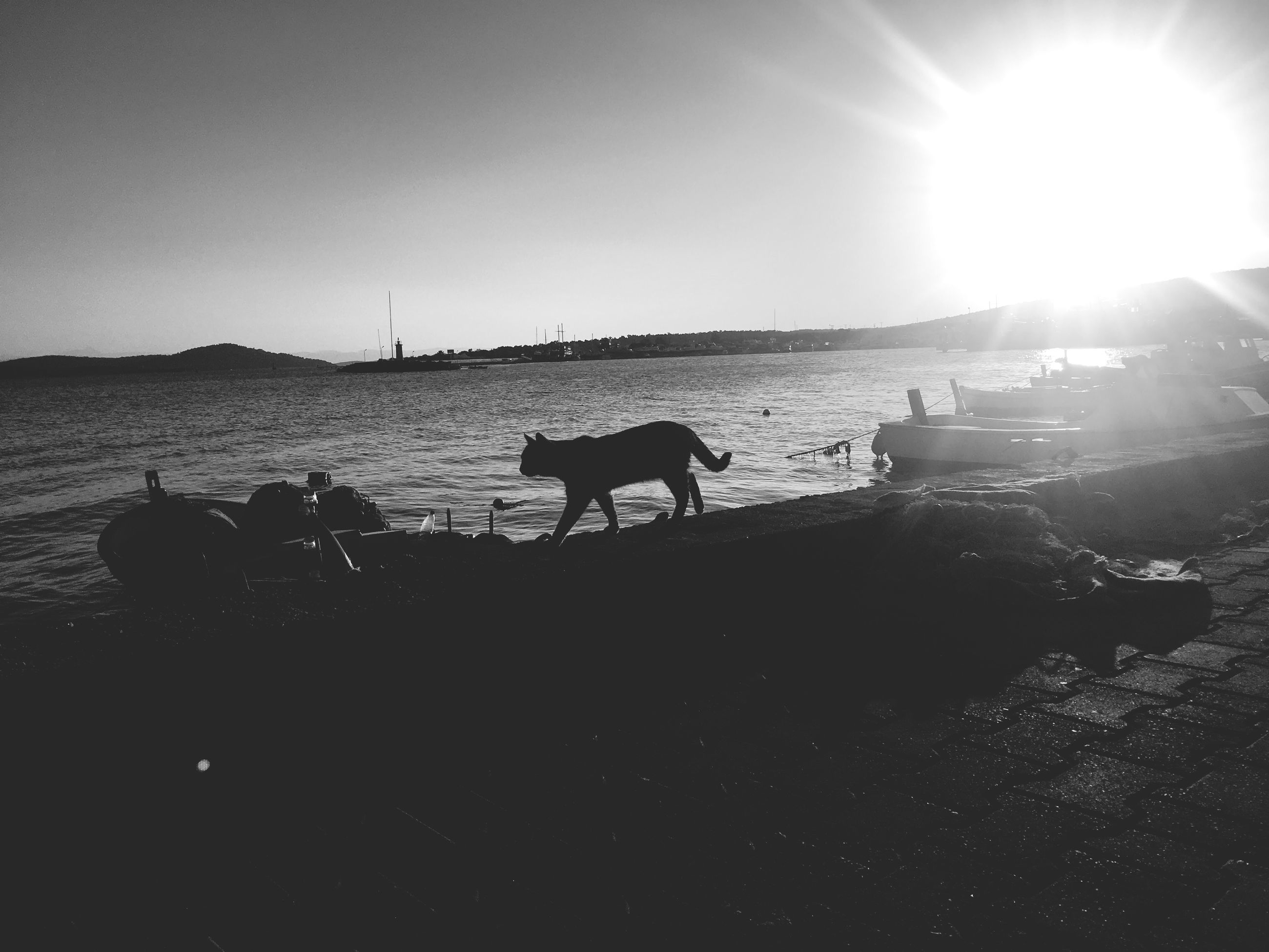 domestic animals, animal themes, sunbeam, mammal, sunlight, lens flare, sun, sky, livestock, nature, silhouette, outdoors, sea, no people, day, tree, beauty in nature