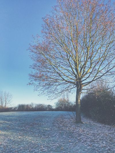 A winters morning Frost Nature Tree Bare Tree Tranquility Clear Sky Outdoors Landscape