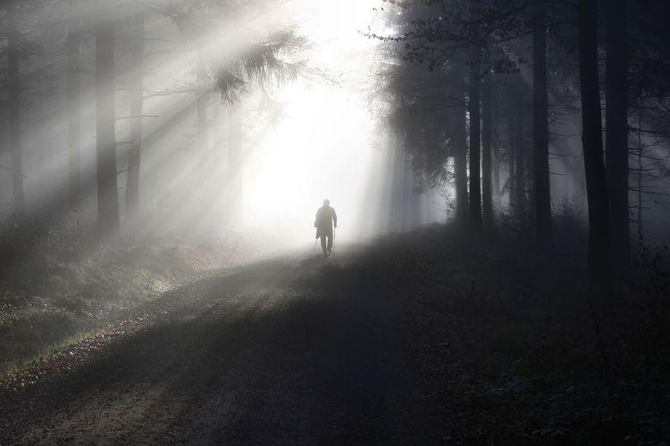 Silhouette Man Walking On Field By Trees In Forest