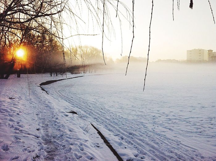 Narute Nature_collection EyeEm Nature Lover Park Hugging A Tree Fog Sunset Walking Around парк Дружбы в Moscow