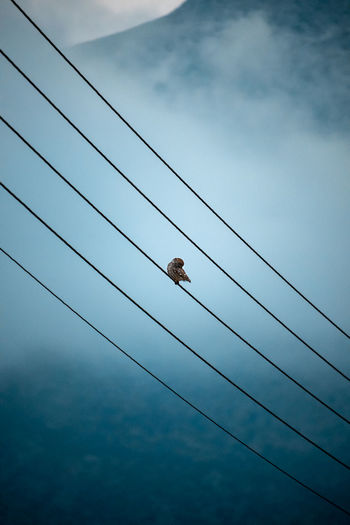 Low angle view of sparrow perching on cable against sky