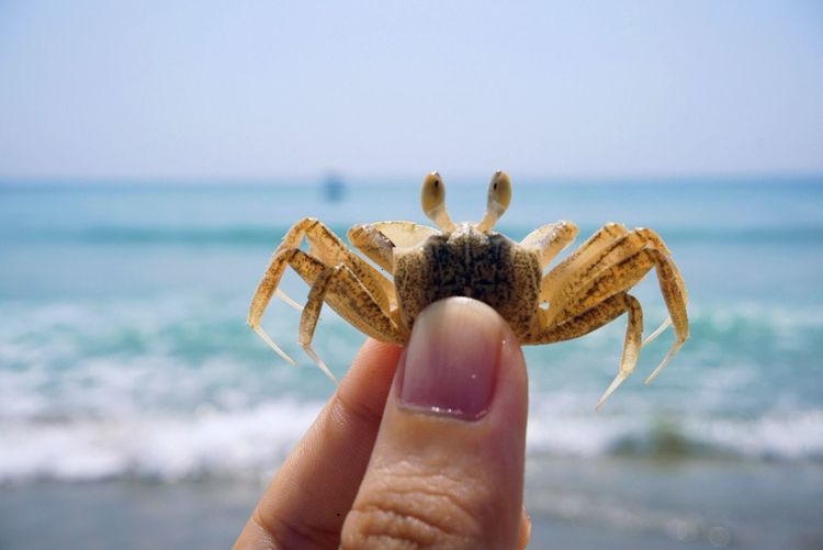 Cropped Image Of Person Holding Crab By Sea Against Sky