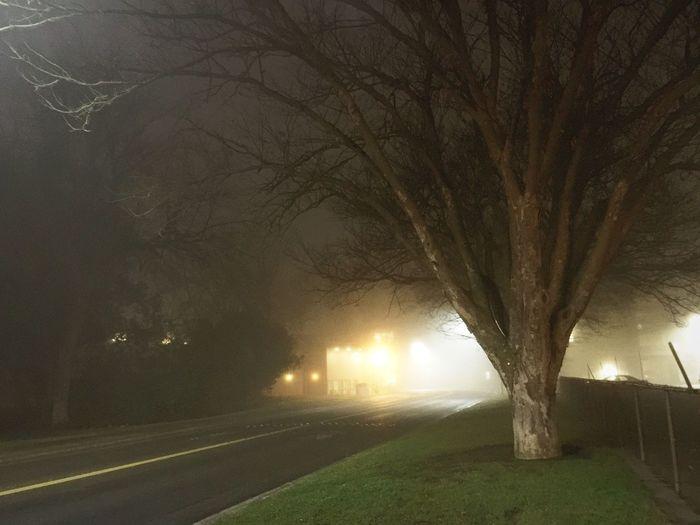 Foggy Morning Night Tree Illuminated Bare Tree Transportation Street Light Road