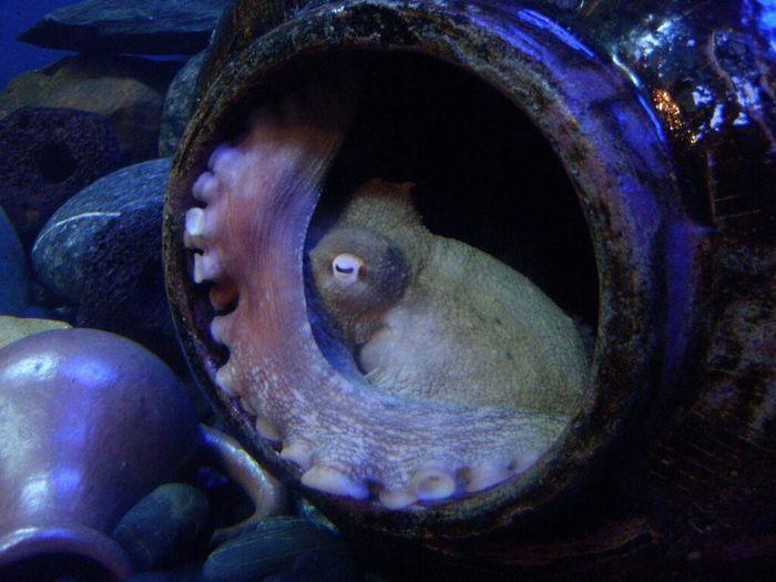 Taking Photos Octopus Aquarium Aquaria Klcc