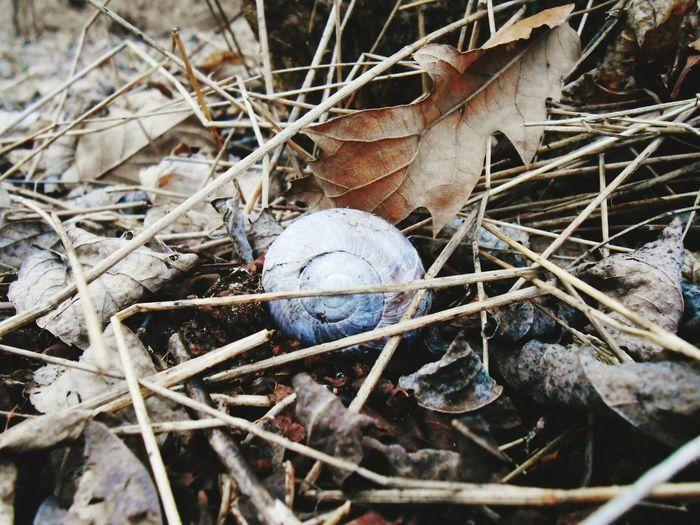Csigaház Csigabiga Csiga Erdő Forest ősz Herbst Nature Beauty In Nature Lonelyness EyeEmNewHere