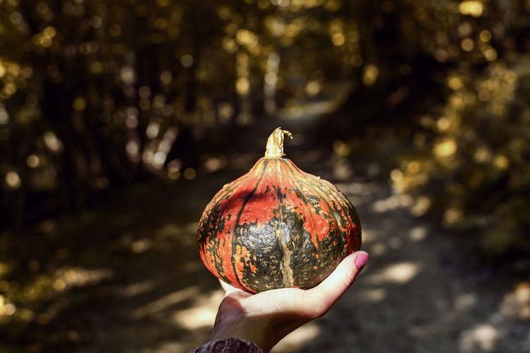 Person holding pumpkin, woods, autumn, fall.