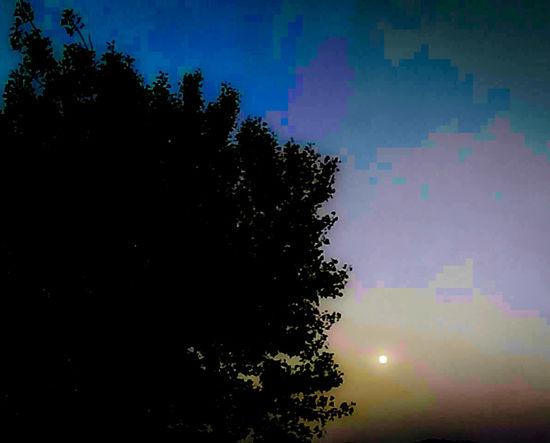Sunlight at Dawn