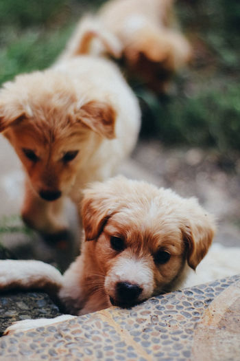Canine Dog Mammal Animal Themes Domestic Animal Pets Group Of Animals Domestic Animals Vertebrate Relaxation Two Animals No People Focus On Foreground Young Animal Close-up Day Puppy Portrait Animal Family