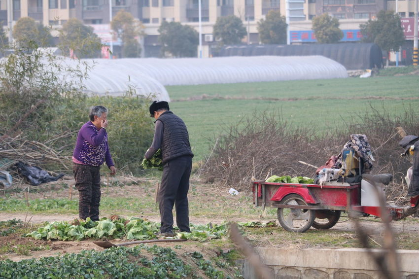Agriculture Farm Rural Scene Farmer Working Outdoors Adult People Adults Only Day 江苏省 淮安 China Street Photography