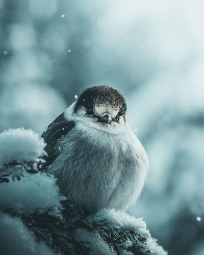Close-up of bird perching on snow