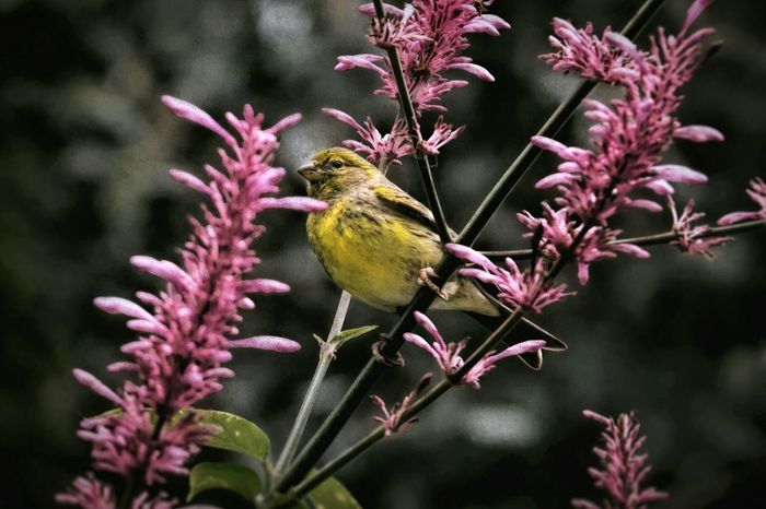 Spring Is Here 🌞 Welcome Spring! Bird Outdoors No People Nature Animals In The Wild Spring Pink Flowering Tree Perching Bird