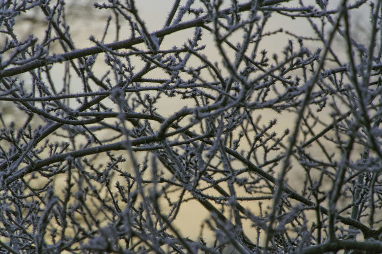 Close-up of bare tree branches during winter
