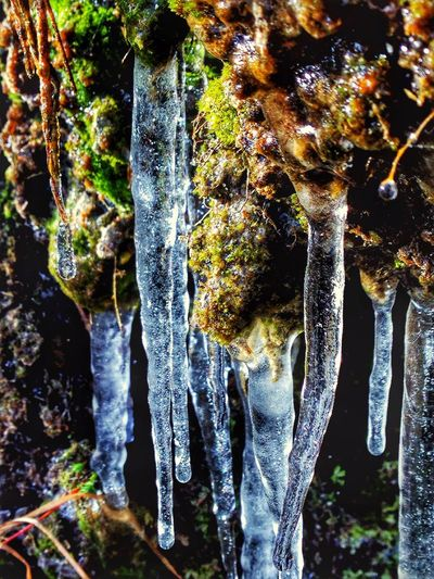 Icecles Winter