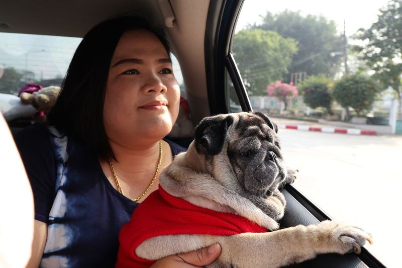 Close-up of woman traveling with dog in car