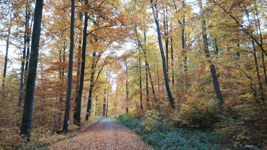 Trees Fall Leaves