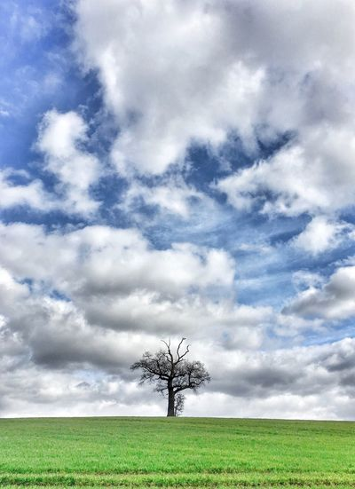 Cloud - Sky Sky Grass Landscape Beauty In Nature No People Outdoors Single Tree Dramatic Sky Cloudscape Taking Photos IPhone