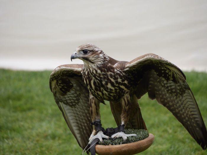 Hawk on plant against cloudy sky