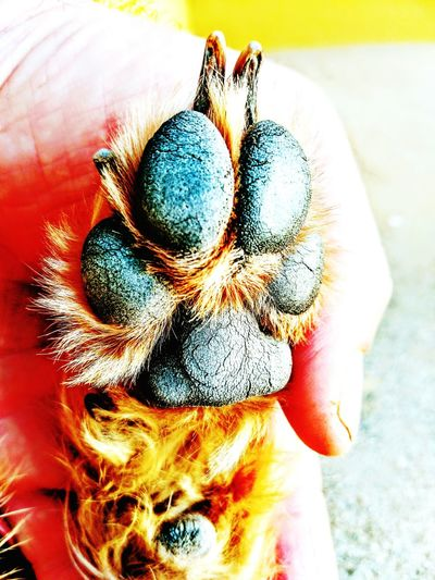 Human Body Part Close-up One Person Human Hand Dog Love Paw Paw Of A Pup Two Hearts Mydog Mypet Pet Dog Dogslife Dog Life Second Acts Rethink Things EyeEmNewHere