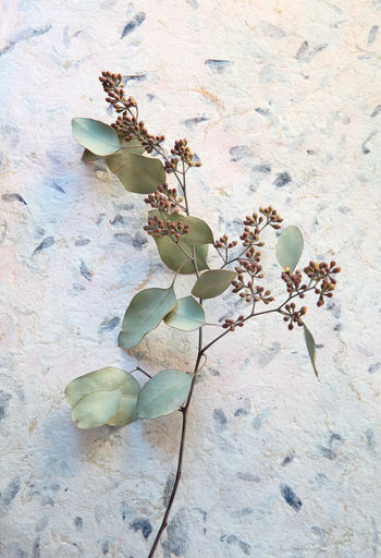 Close-up of wilted plant by wall
