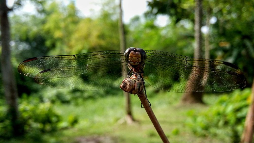 Dragonfly takeing rest Insect Focus On Foreground Nature Day No People Outdoors Damselfly Beauty In Nature Animals In The Wild Animal Themes One Animal Animal Wildlife Plant Close-up